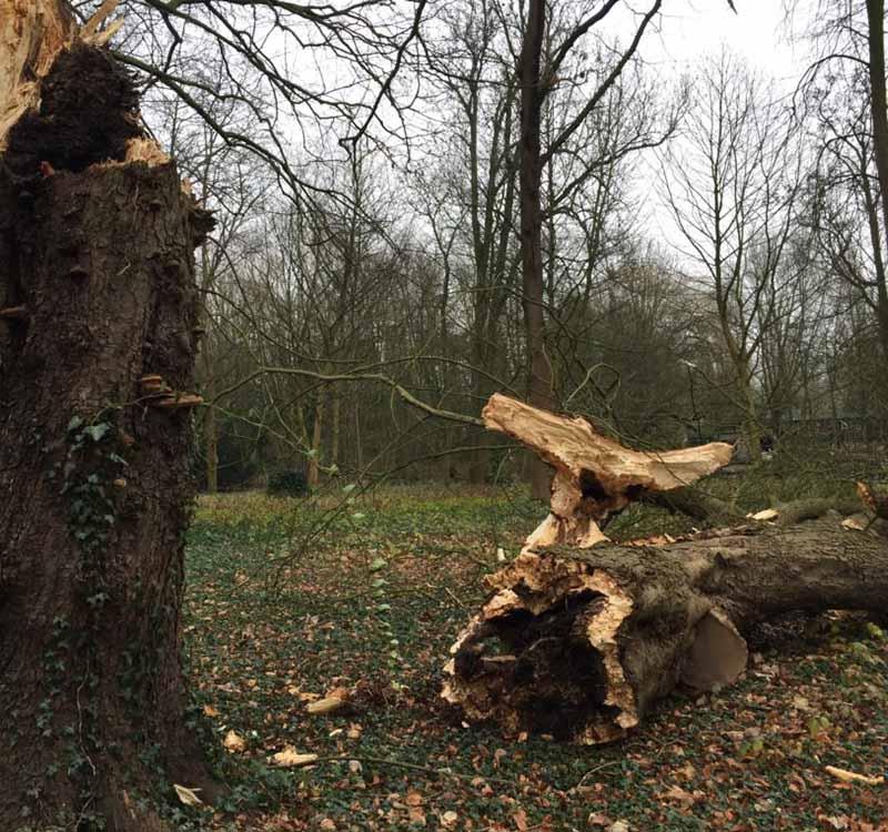 Bomen kappen Dordrecht